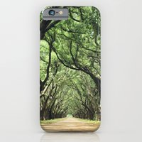 Canopy of Oaks iPhone 6 Slim Case