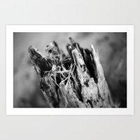 Love Of Driftwood Art Print