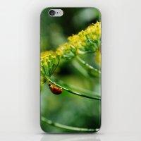 Summer Dill iPhone & iPod Skin