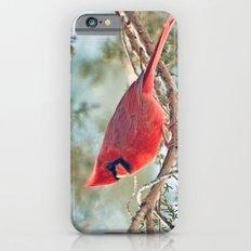 I Spy... (Northern Cardi… iPhone 6 Slim Case