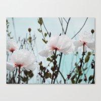 Matilija White Poppies Canvas Print