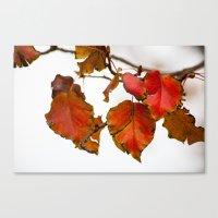 Autumn On A Branch Canvas Print