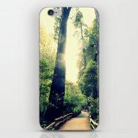 Muir Woods Path 2 iPhone & iPod Skin
