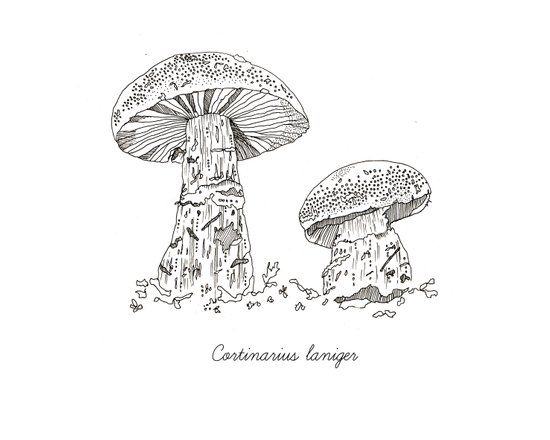 Cortinarius Laniger // Hand Drawn Fungi Series Canvas Print