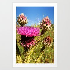 a pink thistle Art Print