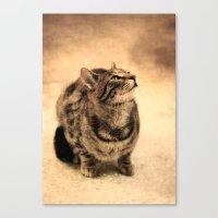 Curious Kitty Canvas Print