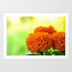 Velvet Petals Art Print
