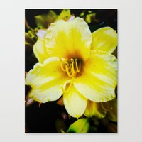 Slow Wilting Beauty Canvas Print