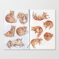 Rhubarb (my cat) studies Canvas Print