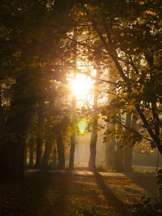 Blessings  (Autumn Sunrise) Art Print