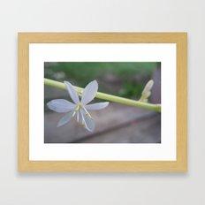 two little white ones Framed Art Print