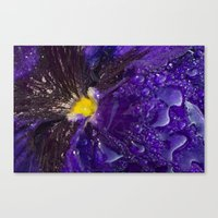 Dressed in gold and dew Canvas Print