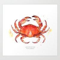 Red Rock Crab 2012 Art Print