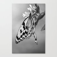 Flutter IV Canvas Print