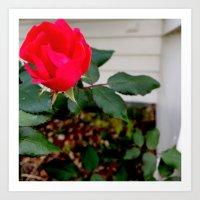 A Rose For Rosemary Art Print