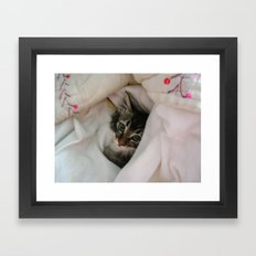 Kitten in Covers Framed Art Print