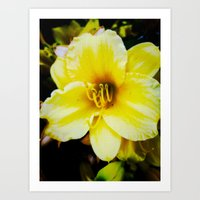 Slow Wilting Beauty Art Print