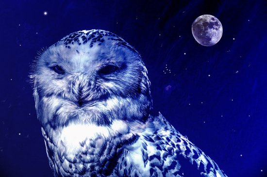 Night owl Art Print