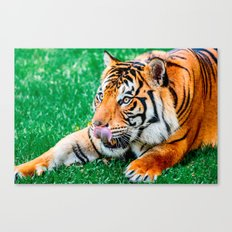 Eager Anticipation Canvas Print