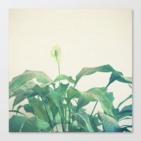 Peace Lily Canvas Print