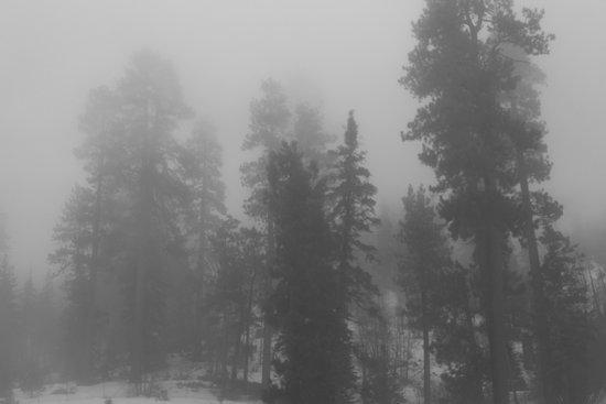 Misty Trees 2 Art Print