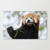 Red Panda 3 Canvas Print