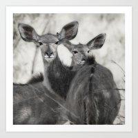 Kudu Art Print