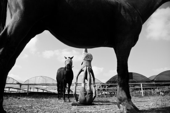 acro horse Art Print