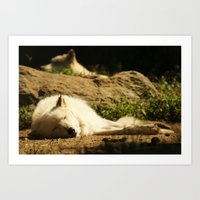 Sleeping White Wolf In T… Art Print
