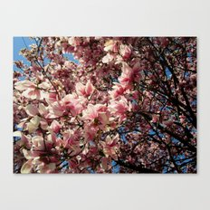 Partially Pink Canvas Print