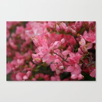 Flowering Crabapples In … Canvas Print