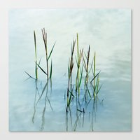 Water grass Canvas Print