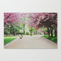 french cherry blossom Canvas Print