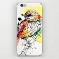Rufous Whistler iPhone & iPod Skin