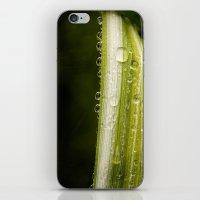 Garden Raindrops iPhone & iPod Skin