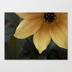 sunny bloom. Canvas Print