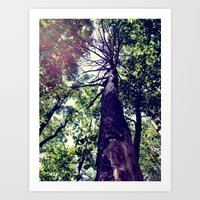 Skyward Art Print