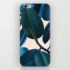 Ficus elastica 2 iPhone & iPod Skin