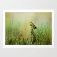 The Meadow Lark Sings Art Print