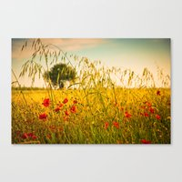 Poppies with tree in the distance Canvas Print