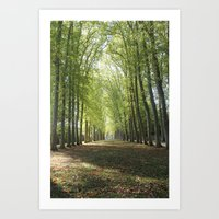 Forests Of Versaille Art Print