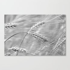 KORNFELD - SCHWARZ/WEISS Canvas Print