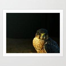Captain Falcon Art Print