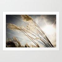 sunlight in the field Art Print