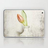 Single Tulip Still Life Laptop & iPad Skin