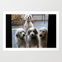 The setter quartet  Art Print
