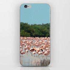 Flamingo Landing iPhone & iPod Skin