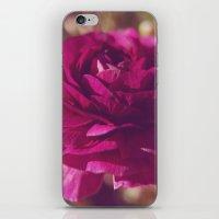 Crimson Rose iPhone & iPod Skin