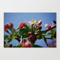 April flowers Canvas Print