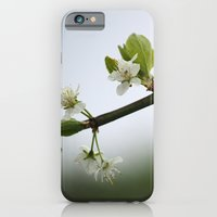 iPhone & iPod Case featuring Victoria Plum Blossom by Steve Watson